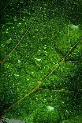 Cuadro hoja verde