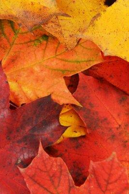 Cuadro hojas de arce