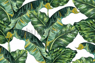 Cuadro Hojas de palmeras tropicales, fondo de patrón floral de vector transparente de hoja de selva