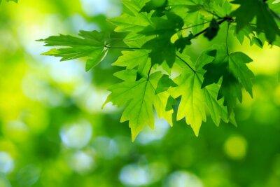 Cuadro hojas verdes