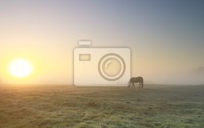 horse grazing in dense fog at sunrise