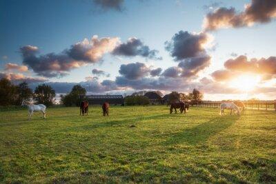 horses on pasture in sunset light