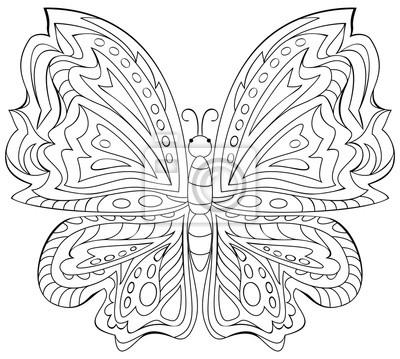 Cuadro Ilustración Blanco Y Negro De La Mariposa Para Colorear Desarrollo