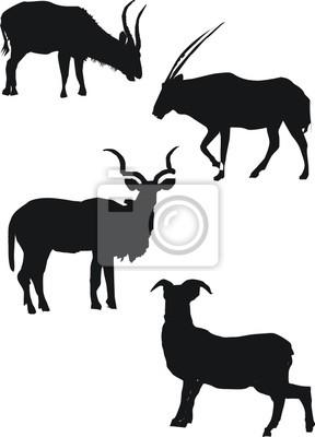 ilustración con las siluetas de cabra