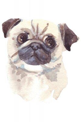 Cuadro Ilustración del bulldog francés