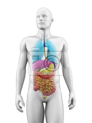 Ilustración médica de los órganos humanos pinturas para la pared ...