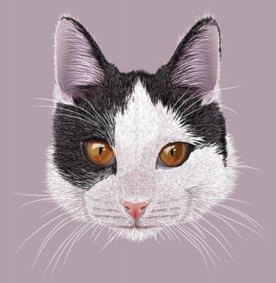 Cuadro Ilustración Retrato de gato doméstico. Gato bicolor joven lindo con los ojos anaranjados.