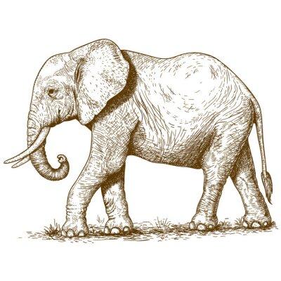 Cuadro ilustración vectorial de elefante grabado