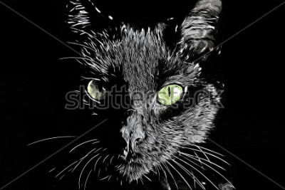 Cuadro Imagen de estilo de scratchboard dibujado a mano realista en blanco y negro de trama de cara de gato