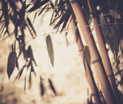 Cuadro Imagen en tonos de una planta de bambú