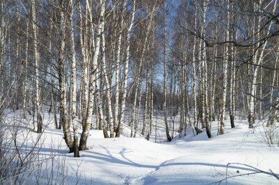 Cuadro Invierno paisaje con abedul blanco