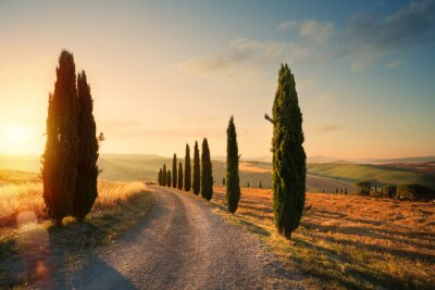 Cuadro italy tuscany countryside rolling hills; summer farmland and country road;