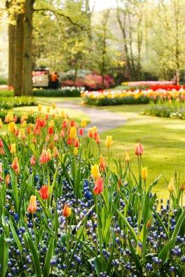 Cuadro Jardín de primavera