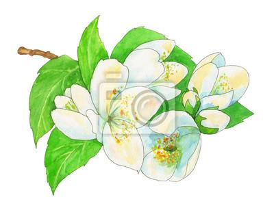Jazmin Flores Blancas Y Hojas Verdes Con Contorno Negro Pintura