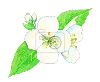 Jazmín, flores blancas y hojas verdes con contorno negro, pintura ...