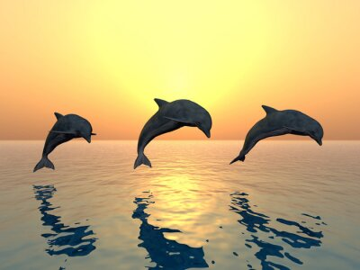 Cuadro Jumping Dolphins