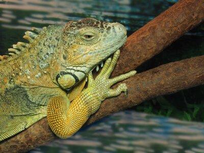 Cuadro La cabeza de lagarto verde en un árbol