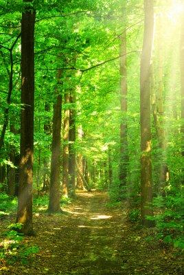 Cuadro la luz del sol bosque