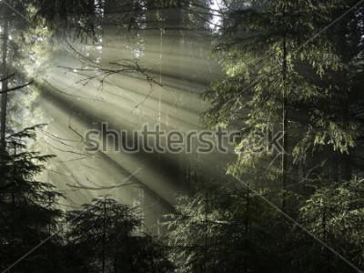 Cuadro La luz del sol brilla a través de los árboles