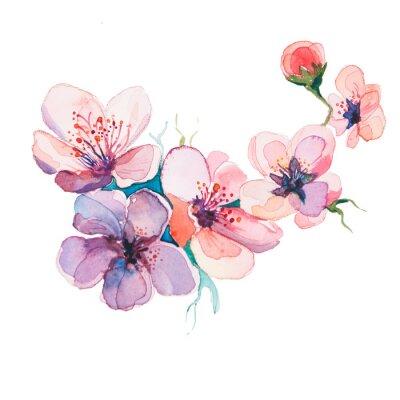 Cuadro las acuarelas flores de primavera aislados en el fondo blanco