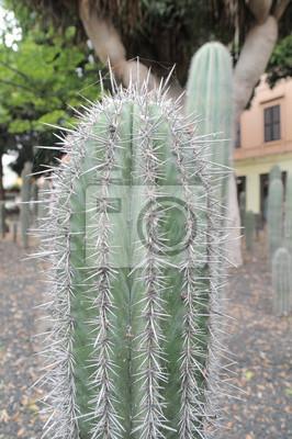 Las plantas verdes suculentas