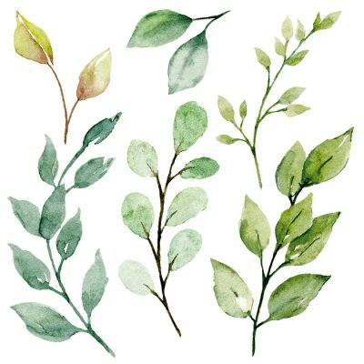 Cuadro Leaves watercolor set. Hand painting floral illustration. Green leaf, plants, foliage, branches isolated on white background.