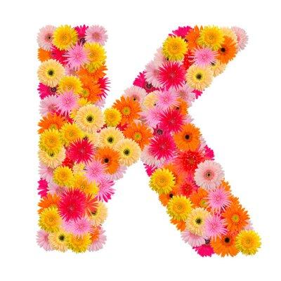 Cuadro Letra K alfabeto con gerbera aislado sobre fondo blanco