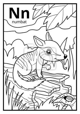 Libro Para Colorear Alfabeto Incoloro Letra N Numbat