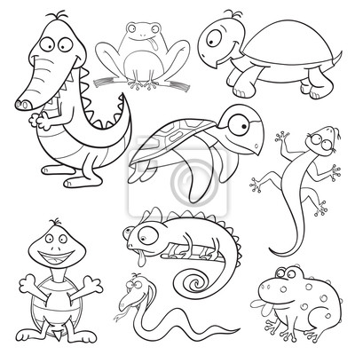 Libro para colorear con reptiles y anfibios pinturas para la pared ...