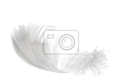 ligero como una pluma en blanco