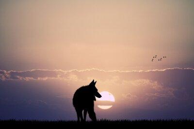 Cuadro lobo al atardecer