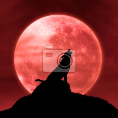 Lobo Aullando A La Luna En La Medianoche Pinturas Para La Pared