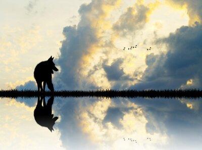 Cuadro Lobo en el río al atardecer