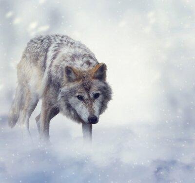 Cuadro Lobo en tiempo de invierno