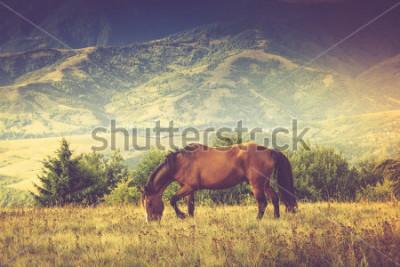 Cuadro Los caballos están pastando contra las montañas. Paisaje de otoño Imagen filtrada: efecto vintage cruzado.