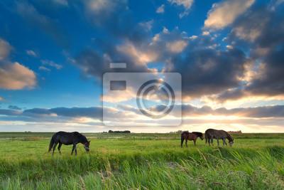 los caballos que pastan en los pastos al atardecer