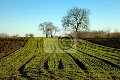 Cuadro Los campos