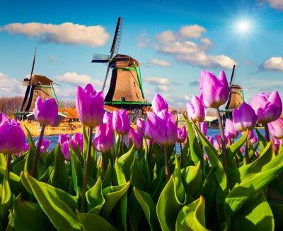 Cuadro Los famosos molinos de viento holandeses