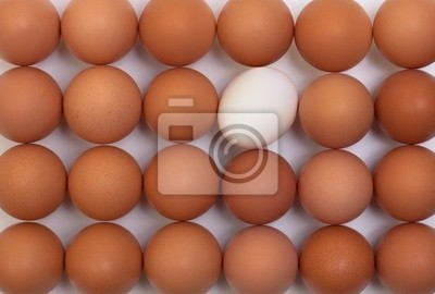 los huevos se colocan en una fila