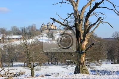 Los viejos árboles de roble al pie de Sababurg