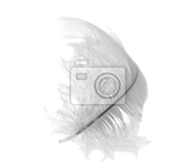 luz blanca del cisne de plumas