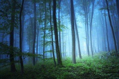 Cuadro Luz de color azul Magia en bosque místico