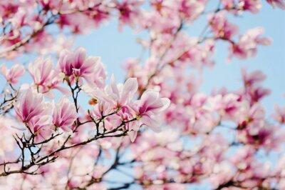 Cuadro Magnolia