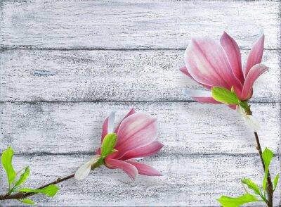 Cuadro Magnolia flores en el fondo de tablones de madera en mal estado