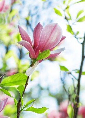 Cuadro Magnolia flores en el parque