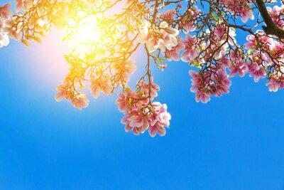 Cuadro Magnolia flores en el sol