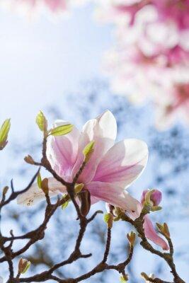Cuadro Magnolienblüte