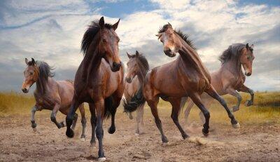 Cuadro manada de caballos