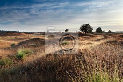 mañana la luz del sol sobre las dunas