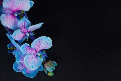 Cuadro Manojo de orquídeas violetas
